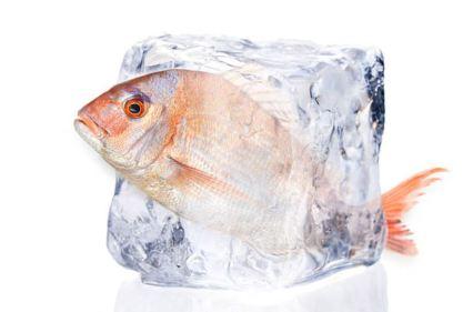 Fish-in-ice-cube
